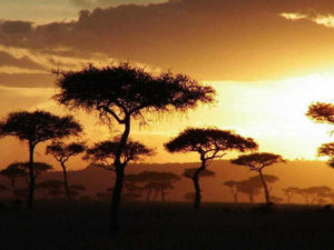 sawanna w zachodzącym słońcu