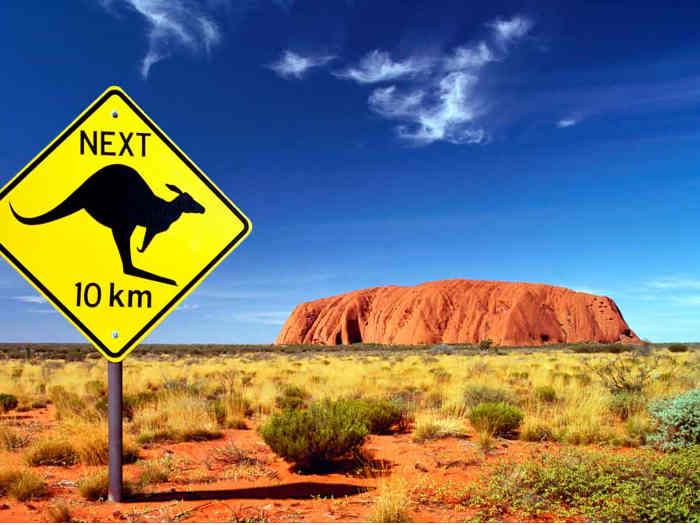 czerwona gura w australii