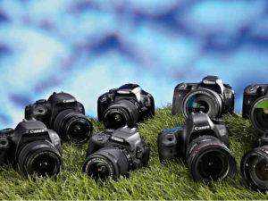 aparaty fotograficzne na trawie