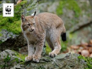 kot na skałech